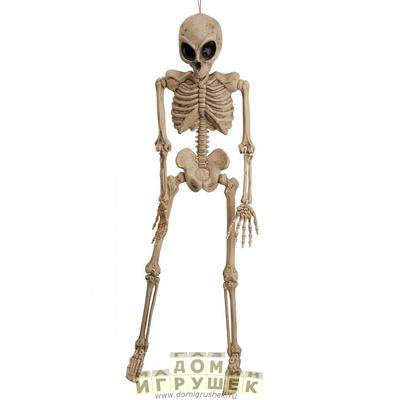 Скелет инопланетянина